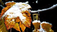 Winterfeelings  2008/2009