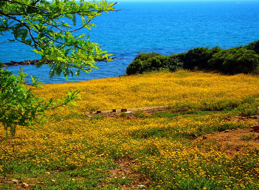 Seashore in spring