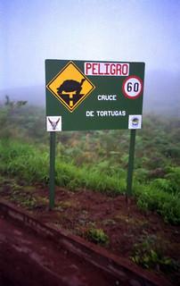 1999 #298-25A Ecuador Galápagos tortoise crossing