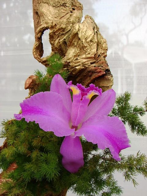 Arreglos florales con orquideas auto design tech - Arreglos florales naturales ...