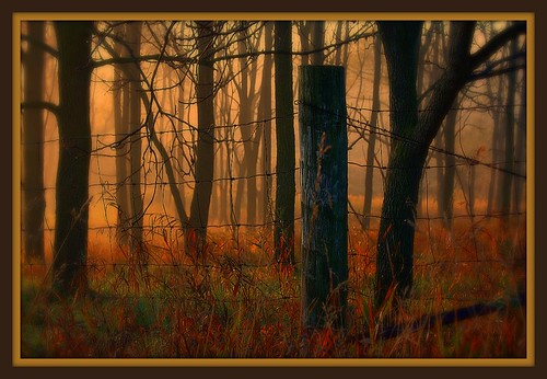 lighting plants sunlight nature beautiful weather silhouette fog sunrise effects scenery poetry perspective scenic vistas myfavorites viewpoint enhanced inafog poeticlicense titlecompany anawesomeshot lookspainted thewholecaboodle natureselegantshot absolutegoldenmasterpiece horizontalhorizons
