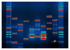 Micah's DNA par micahb37
