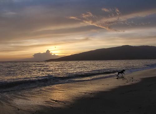 sunset sea vacation sky dog beach clouds hawaii sand running maui peggy kihei ©allrightsreserved april2011 ©peggyhughes
