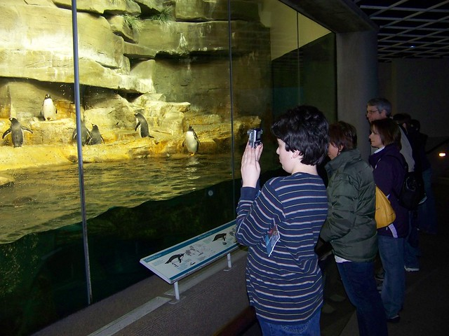 Chris with Penguins at the Shedd Aquarium