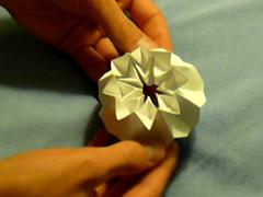 Octagons for October #17: Metamorphosis