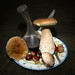King Bolete - Photo (c) Gontzal Ballesteros, some rights reserved (CC BY-NC-ND)