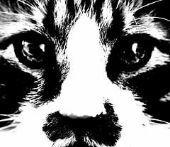 [フリー画像素材] 動物 (哺乳類), 猫・ネコ, モノクロ ID:201212311800