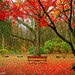 How Would It Feel? Sitting On a Red Chair, Surrounding by Red Leaves?