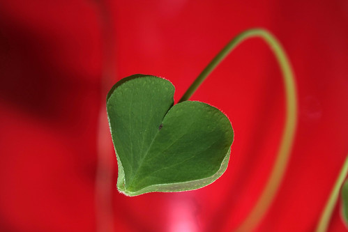Heart shape leaf