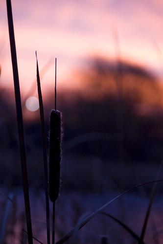 minnesota sunrise cattail mapped heritagepark stcloud
