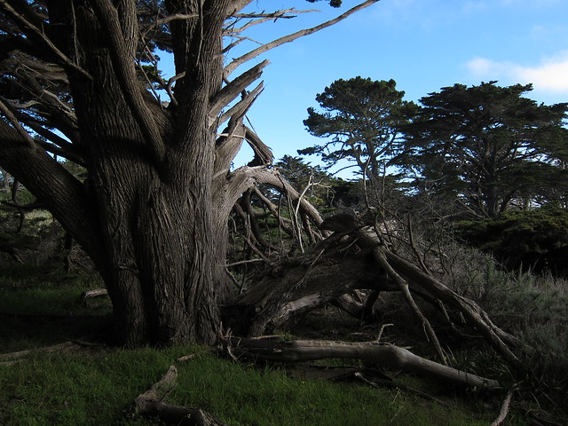 Point Lobos Minication