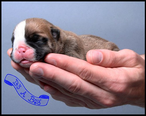 Bubba - 05-05-2011 - 2 days old