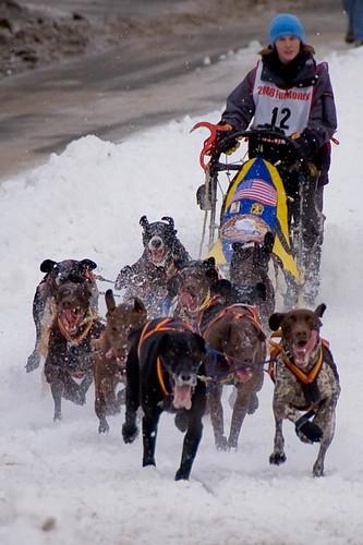 2299509133 05280e7003 Sled Dogs #12   1