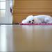 Hi, Im a poodle by Daniel Perlin