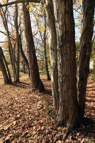 Little grove