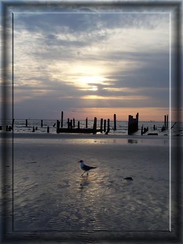 morning sky sun bird water clouds sunrise diamondclassphotographer
