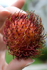 flower(0.0), plant(0.0), produce(0.0), food(0.0), proteales(0.0), rambutan(1.0), macro photography(1.0), flora(1.0), fruit(1.0), close-up(1.0),