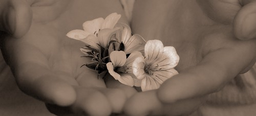 flowers beauty holding hands olympus e510 seepia digitalcameraclub aplusphoto