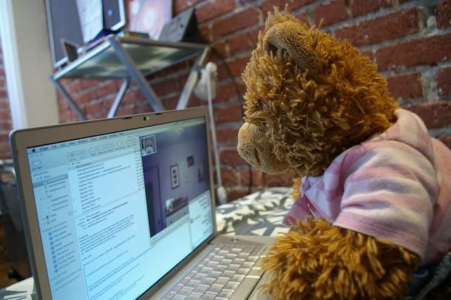 Bear using computer   Flickr - Photo Sharing!