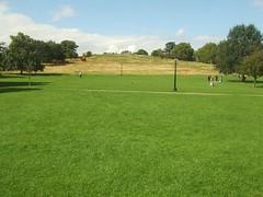 prairie, field, grass, plain, plant, artificial turf, golf course, meadow, lawn, pasture, grassland,