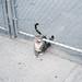 questo gatto è completamente pazzo by SERENA_P.