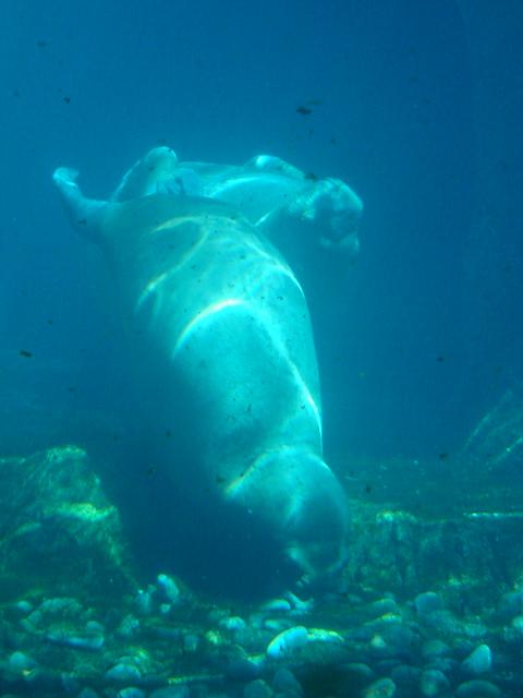 Image Result For Ny Aquarium