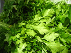 leaf, parsley, herb, food, coriander, chervil, fines herbes,