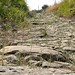 Small photo of Greek Road
