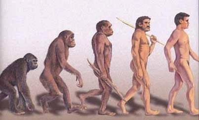 evolution (37)