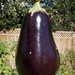 very large dusky eggplant