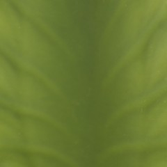 Green (blurred leaf)
