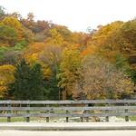 Bridge over Englewood Creek, Palisades Interstate Park NJ