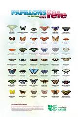 Centre Jardin Hamel Affiche Papillons En Fete 2008 Flickr