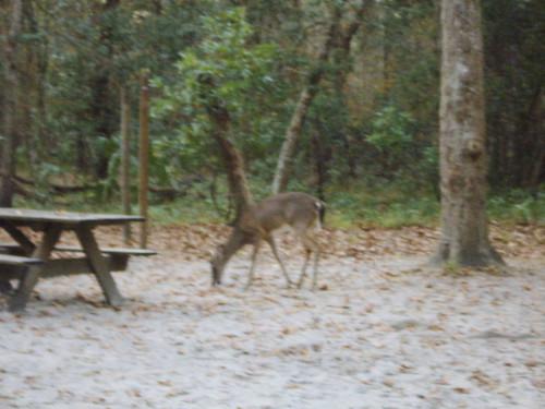 statepark family camping vacation florida manateesprings