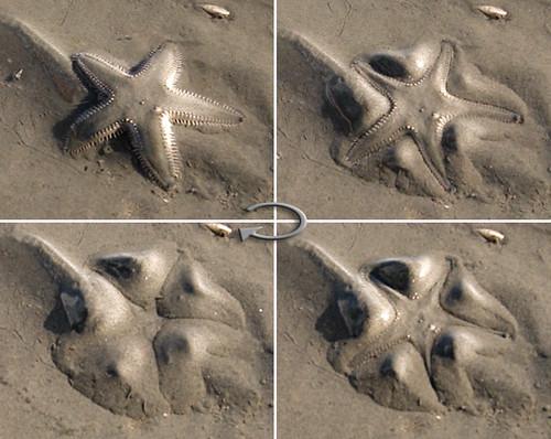 Hiding Starfish