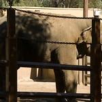 Los Angeles Zoo 066