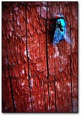 242/365 - Super fly guy...