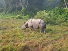 animal, plain, grazing, rhinoceros, fauna, wilderness, jungle, pasture, grassland, safari, wildlife,