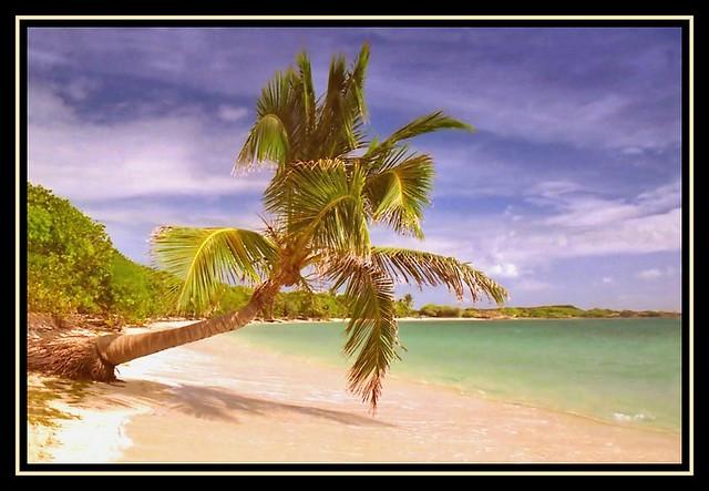cocotier de la plage des salines a photo on flickriver. Black Bedroom Furniture Sets. Home Design Ideas
