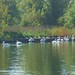 Small photo of Pelicans