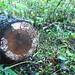 Small photo of Fungus among us
