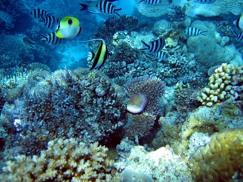 Aquarium style