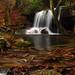 Rainy Day at Laurel Falls by the waterfallhunter