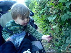 picking blackberries from his seat in the baby jogge…
