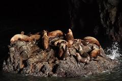 Sea Lion Cave 4