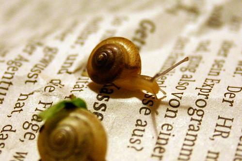 Merry lettuce snails I