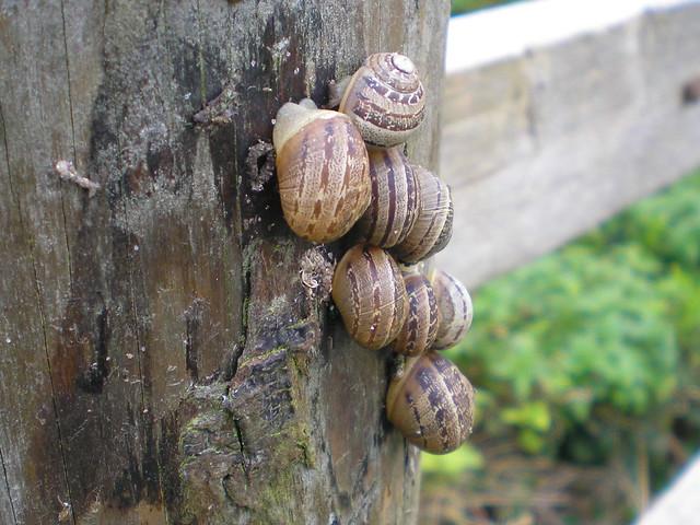 Snail Gathering
