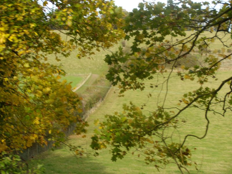 view past the trees Goring circular