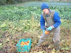 lawn(0.0), agriculture(1.0), farm(1.0), field(1.0), soil(1.0), gardener(1.0), harvest(1.0), farmworker(1.0), crop(1.0), plantation(1.0),