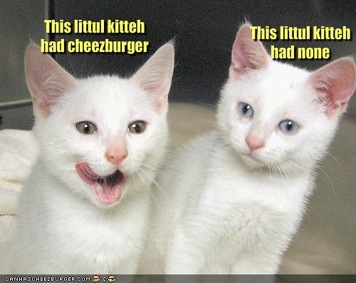 funny-pictures-only-one-cat-had-a-cheeseburger